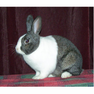 Bunny Magnet Photo Sculpture