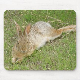 Bunny On Break Mouse Mat