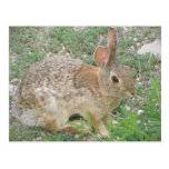 Bunny Ponders Weed Post Cards