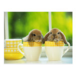 bunny postcard 4
