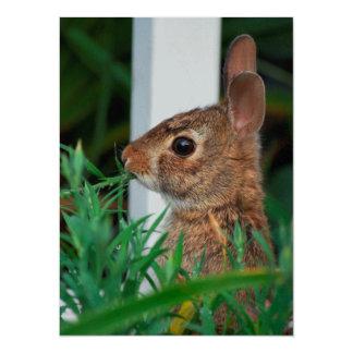 Bunny Rabbit 14 Cm X 19 Cm Invitation Card