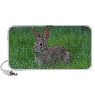 Bunny Rabbit Doodle Speaker