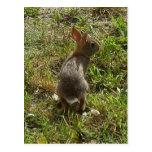 Bunny Rabbit Hare Stuff Postcards