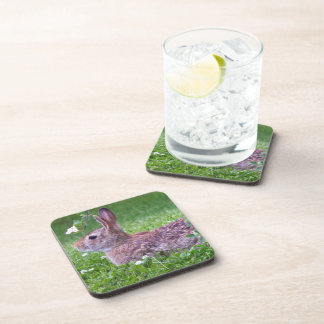 Bunny Rabbit in Grass Closeup Photo Coaster