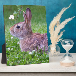 Bunny Rabbit in Grass Closeup Photo Plaque