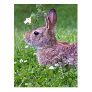 Bunny Rabbit in Grass Closeup Photo Postcard