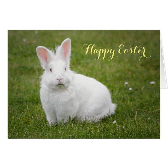 Bunny rabbit photography art card