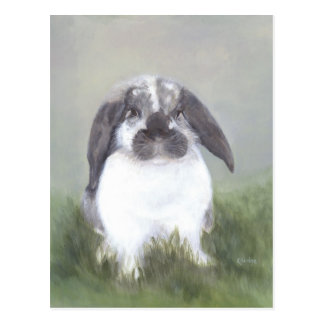 Bunny Rabbit Postcard