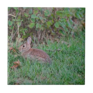 Bunny Tile