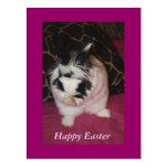 Bunny Washing Postcard