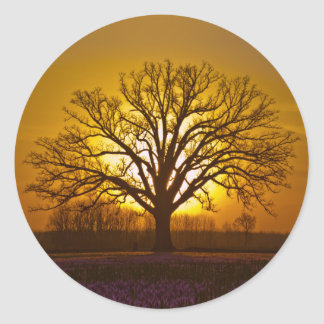 Bur Oak Sunset Classic Round Sticker