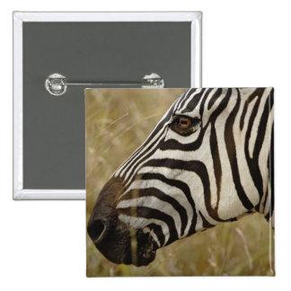 Burchelli's Zebra, Equus burchellii, Masai 15 Cm Square Badge