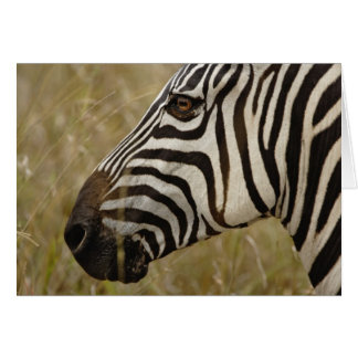 Burchelli's Zebra, Equus burchellii, Masai Greeting Card
