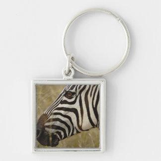 Burchelli's Zebra, Equus burchellii, Masai Keychains