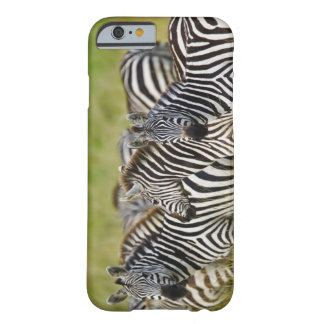 Burchelli's Zebra, Equus burchellii, Masai Mara, 2 Barely There iPhone 6 Case