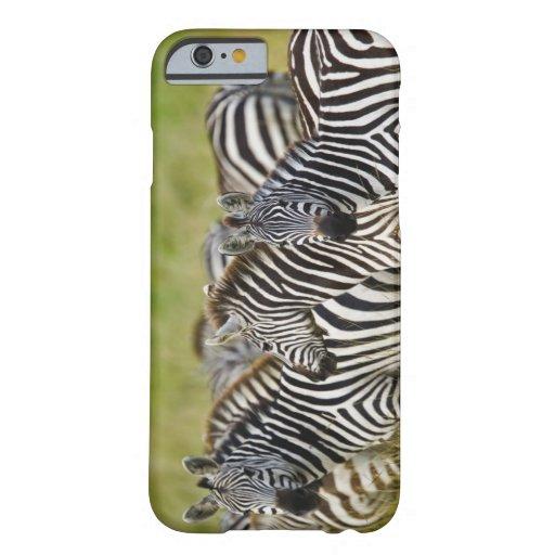 Burchelli's Zebra, Equus burchellii, Masai Mara, 2 iPhone 6 Case