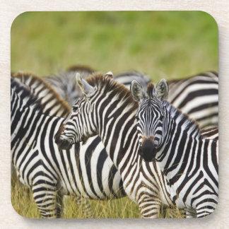 Burchelli's Zebra, Equus burchellii, Masai Mara, 2 Drink Coaster
