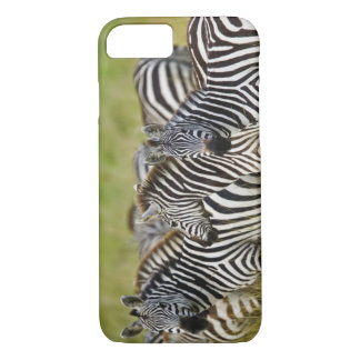 Burchelli's Zebra, Equus burchellii, Masai Mara, 2 iPhone 7 Case