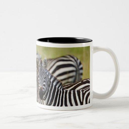 Burchelli's Zebra, Equus burchellii, Masai Mara, 2 Coffee Mugs