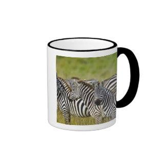 Burchelli's Zebra, Equus burchellii, Masai Mara, 2 Mugs