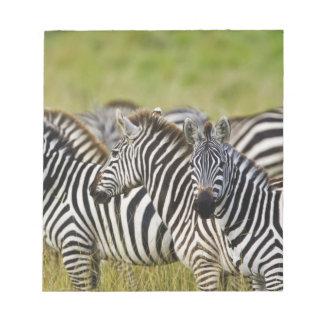 Burchelli's Zebra, Equus burchellii, Masai Mara, 2 Note Pads