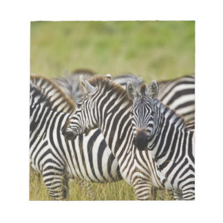 Burchelli's Zebra, Equus burchellii, Masai Mara, 2 Notepad