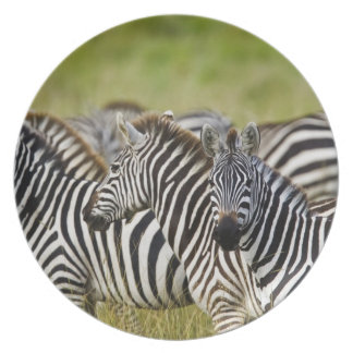 Burchelli's Zebra, Equus burchellii, Masai Mara, 2 Party Plates