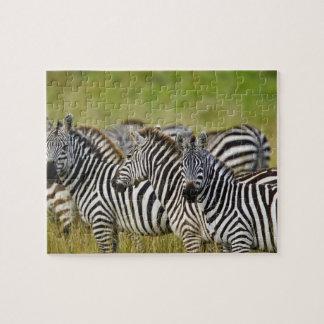 Burchelli's Zebra, Equus burchellii, Masai Mara, 2 Jigsaw Puzzles