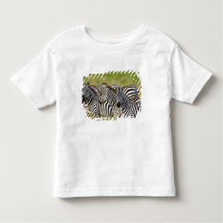 Burchelli's Zebra, Equus burchellii, Masai Mara, 2 Shirts