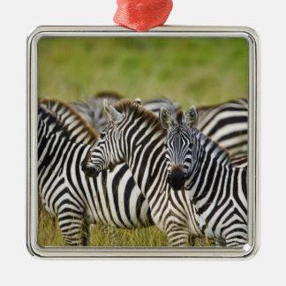Burchelli's Zebra, Equus burchellii, Masai Mara, 2 Silver-Colored Square Decoration