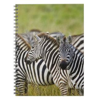 Burchelli's Zebra, Equus burchellii, Masai Mara, 2 Spiral Notebook