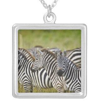 Burchelli's Zebra, Equus burchellii, Masai Mara, 2 Square Pendant Necklace