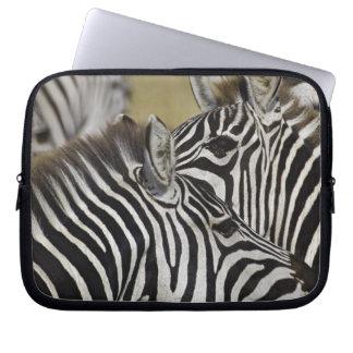 Burchelli's Zebra, Equus burchellii, Masai Mara, 3 Laptop Sleeve