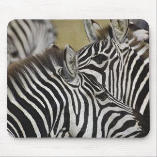 Burchelli's Zebra, Equus burchellii, Masai Mara, 3 Mousepads