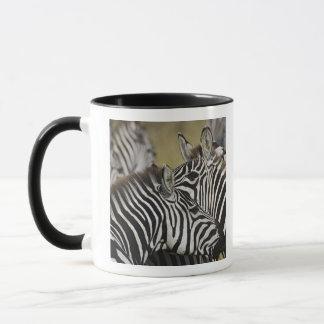 Burchelli's Zebra, Equus burchellii, Masai Mara, 3 Mug