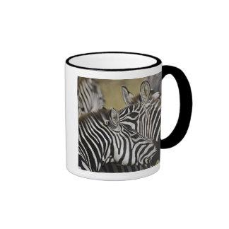 Burchelli's Zebra, Equus burchellii, Masai Mara, 3 Coffee Mugs