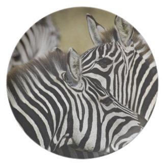 Burchelli's Zebra, Equus burchellii, Masai Mara, 3 Party Plates