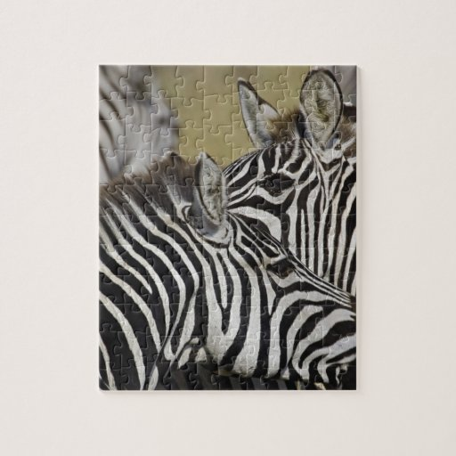 Burchelli's Zebra, Equus burchellii, Masai Mara, 3 Puzzle