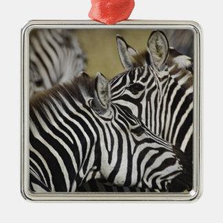 Burchelli's Zebra, Equus burchellii, Masai Mara, 3 Silver-Colored Square Decoration