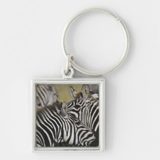 Burchelli's Zebra, Equus burchellii, Masai Mara, 3 Silver-Colored Square Key Ring