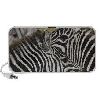 Burchelli's Zebra, Equus burchellii, Masai Mara, 3 Travel Speaker