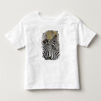 Burchelli's Zebra, Equus burchellii, Masai Mara, 3 T-shirts