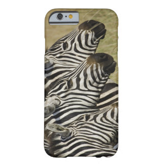 Burchelli's Zebra, Equus burchellii, Masai Mara, 4 Barely There iPhone 6 Case