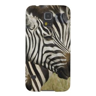 Burchelli's Zebra, Equus burchellii, Masai Mara, 4 Galaxy S5 Case