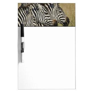 Burchelli's Zebra, Equus burchellii, Masai Mara, 4 Dry-Erase Whiteboard