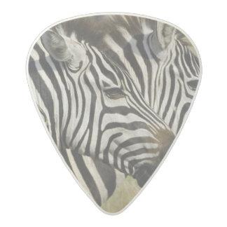 Burchelli's Zebra, Equus burchellii, Masai Mara, 4 Acetal Guitar Pick