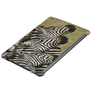 Burchelli's Zebra, Equus burchellii, Masai Mara, 4
