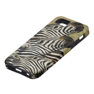 Burchelli's Zebra, Equus burchellii, Masai Mara, 4 iPhone 5 Case