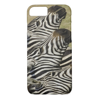 Burchelli's Zebra, Equus burchellii, Masai Mara, 4 iPhone 7 Case