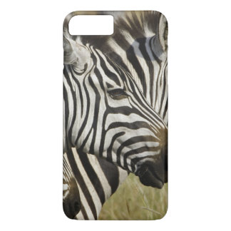 Burchelli's Zebra, Equus burchellii, Masai Mara, 4 iPhone 7 Plus Case